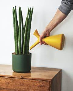yellow flower in green ceramic pot